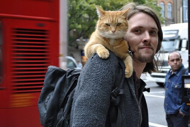 Уличный кот по имени боб. Как человек и кот обрели надежду на.