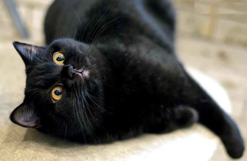 Снится умершая кошка больной
