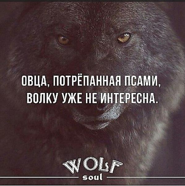 Картинки цитаты волков и львов