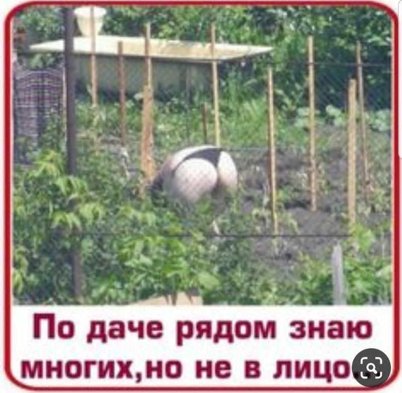 Соседей по даче знаю многих но не в лицо картинка