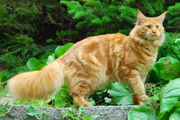 Завели кота рыжего