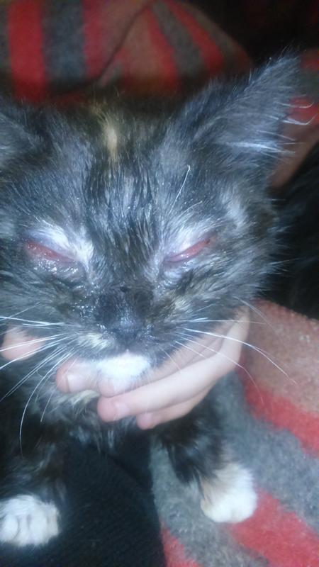 Котенок чихает что делать в домашних условиях