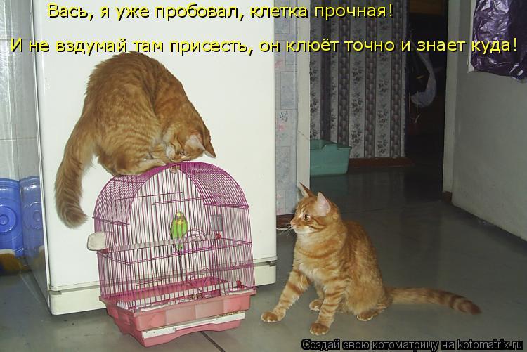 Поздравление месяцев, смешные картинки про попугая с надписями