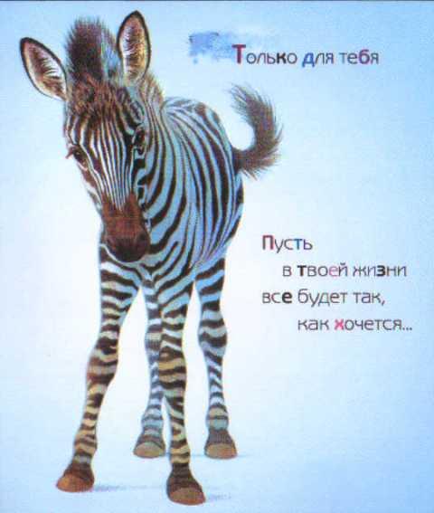 Поздравления зебра в картинках