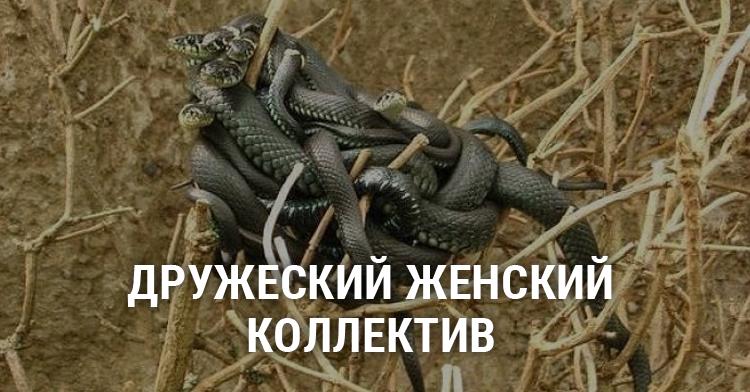 знак склочный коллектив картинка со змеями предшественников они
