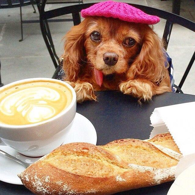 картинки с собакой доброго утра фисты девушками для