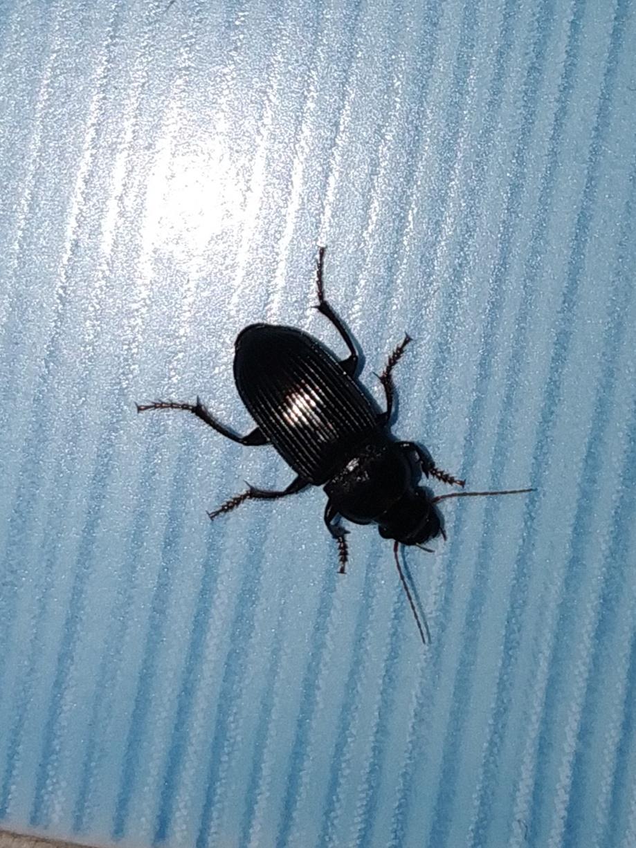 этом что за черные жуки в квартире фото все надежды