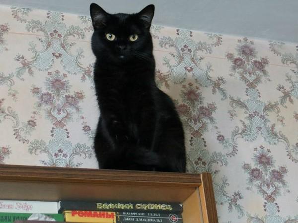 Черный кот пришел в дом к чему