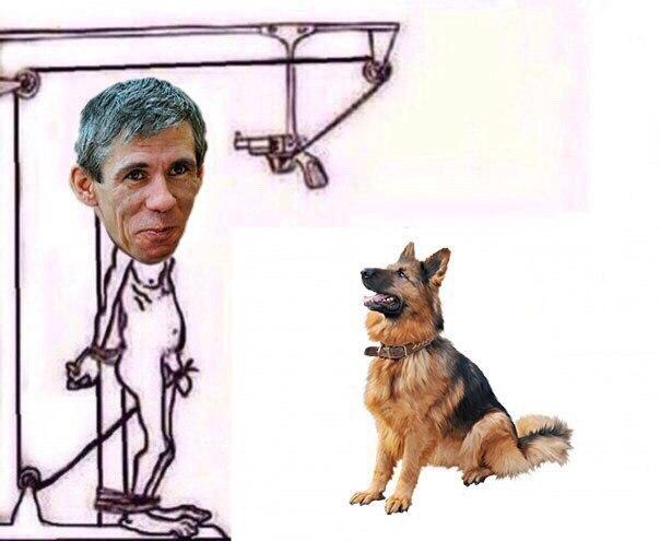 Панин и собака приколы картинки, правильно