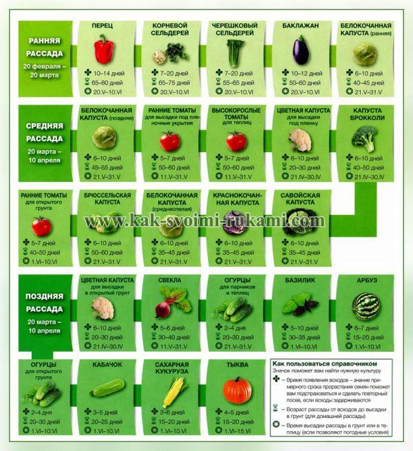 Когда сажать овощи на рассаду - расчет сроков по формуле 96