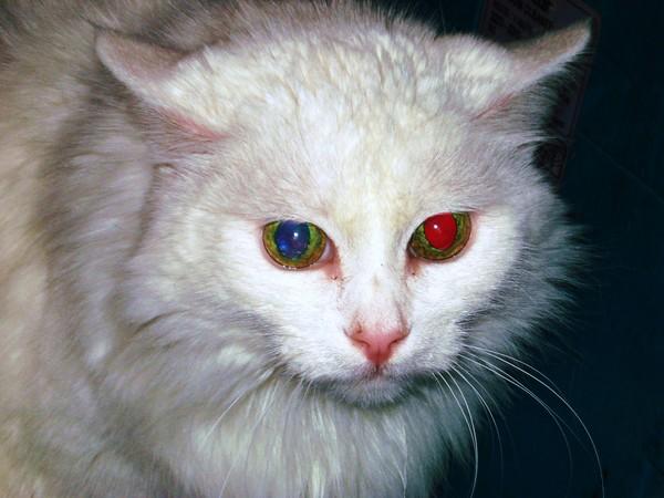 У кота зрачки красные