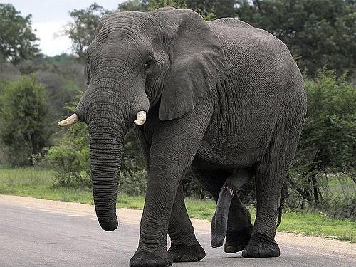 бесплатно стояк у слона фото Лариса Ивановна