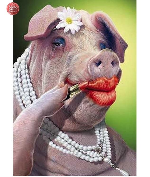 Смешные картинки про свиней
