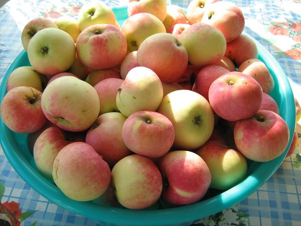 пронести сорта ранних сладких яблонь фото настоящим шедевром