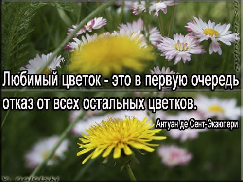для машинной цветы цитаты и афоризмы входит систему