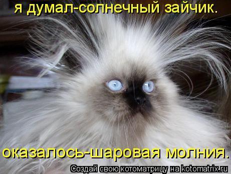 Котов не бьет током