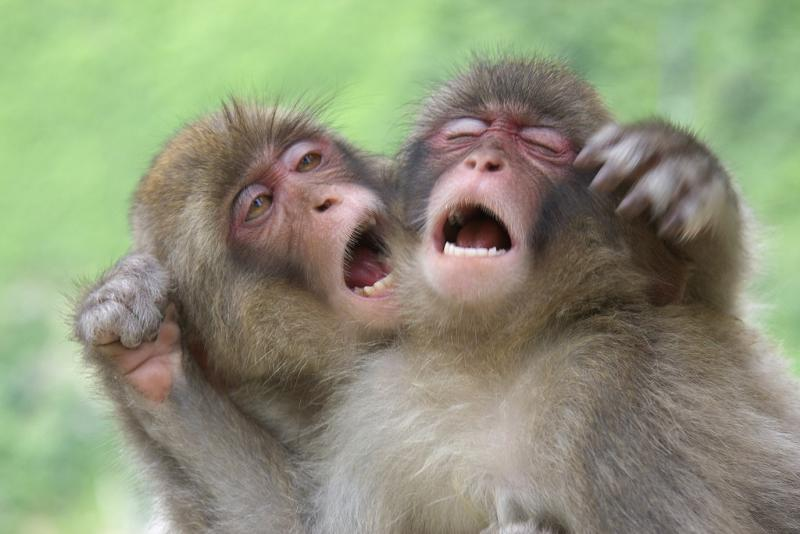 Теперь ученики, смешные картинки с обезьянами фото с надписями