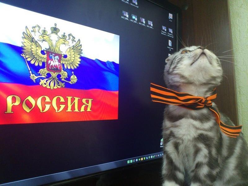 с днем россии коты помнить