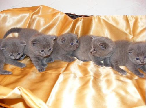 Новорожденные вислоухие котята фото