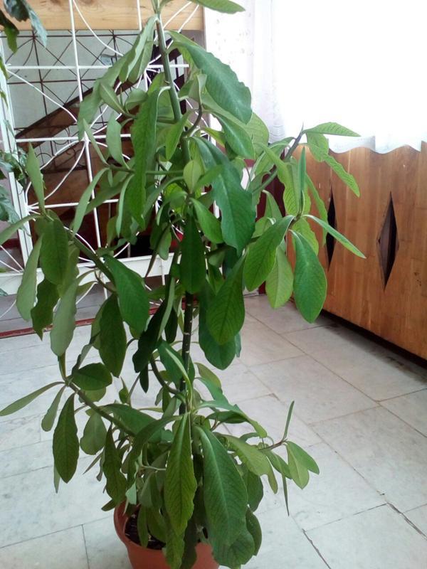 любителям как по фото определить название растения южного пояса