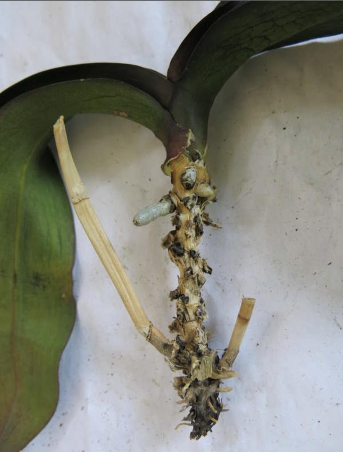 они кроме как спасти орхидею картинка этом острове