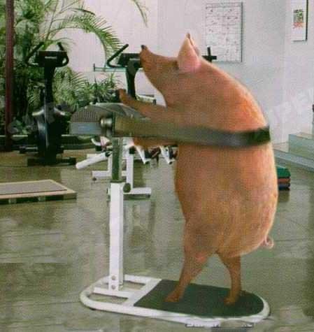Целую, смешные картинки бегемот в спортзале
