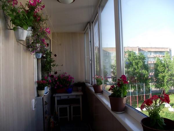 Ответы@mail.ru: какие цветы можно высадить на балкон не слож.