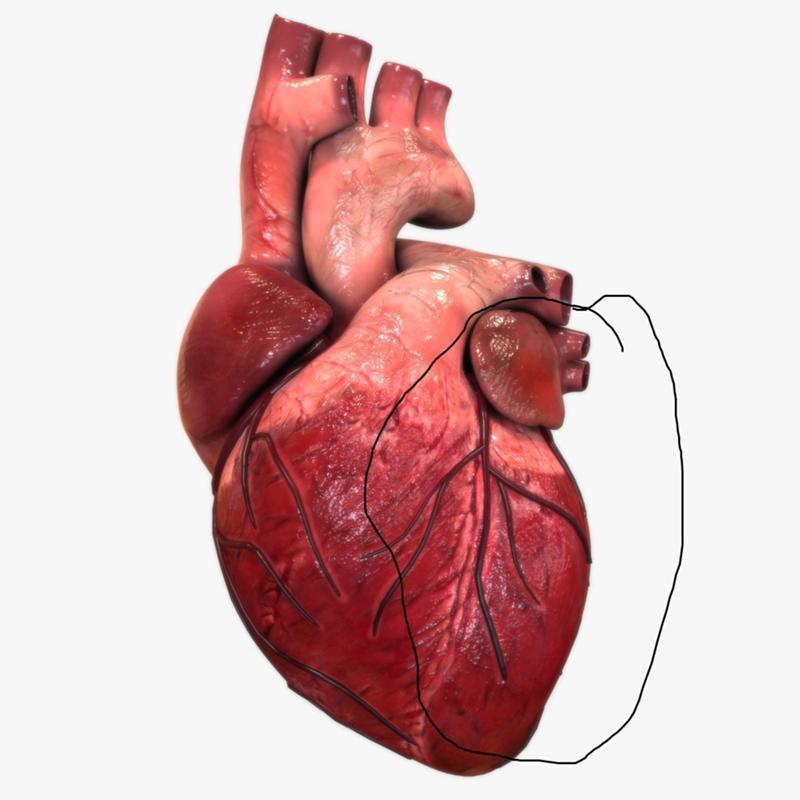 Картинка серце людини