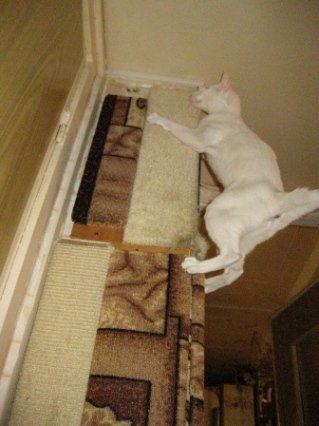Cat door height