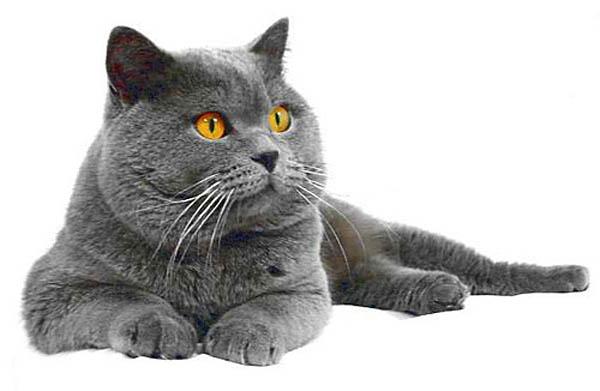 породы всех кошек