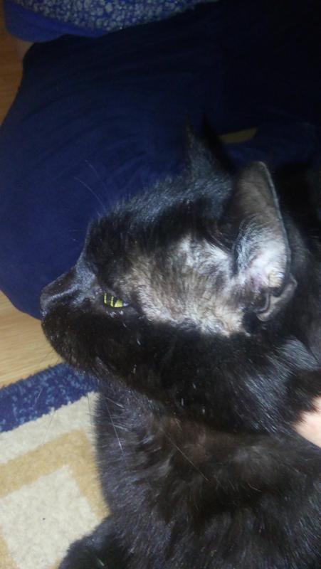 У кота появилась влажная лысина он ее лижет — 6