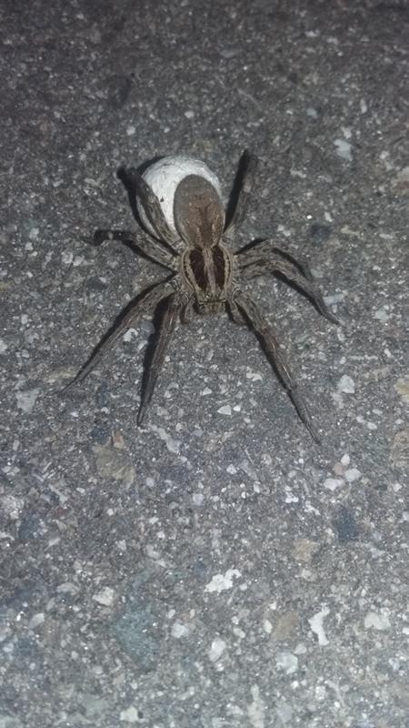 оба пауки сочи фото и описание множества фото