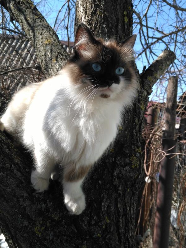 Кошка летом сильно похудела