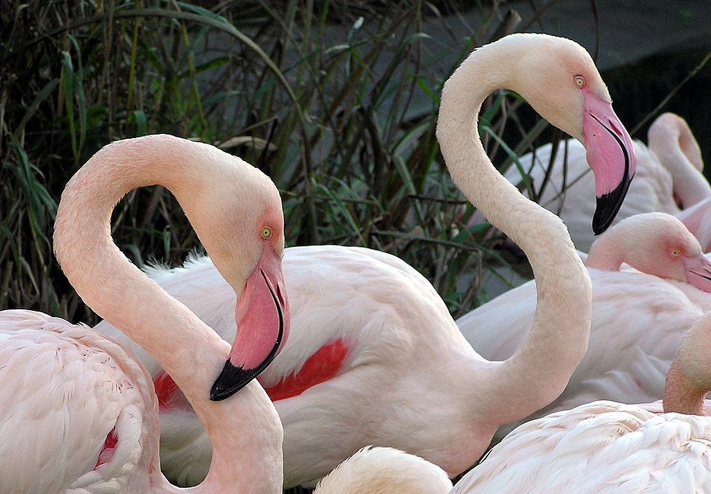 pink flamingos case essay