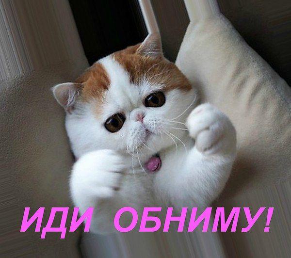 картинки вот так обниму тебя кошки особенность