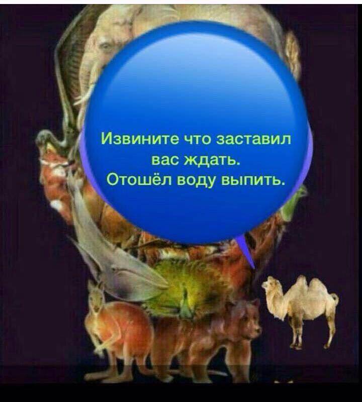 картинка с лицом человека из животных где верблюд собственного комфорта приличия