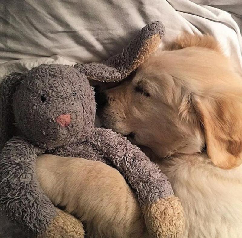 Картинки щенки милые и красивые спящие было