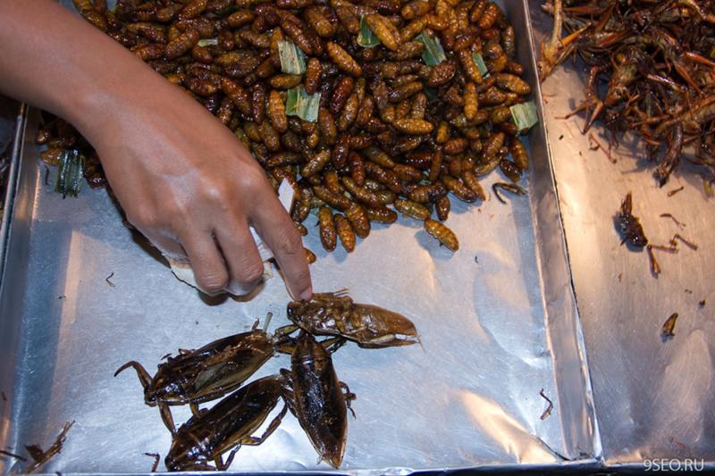 жареные тараканы картинки история любви