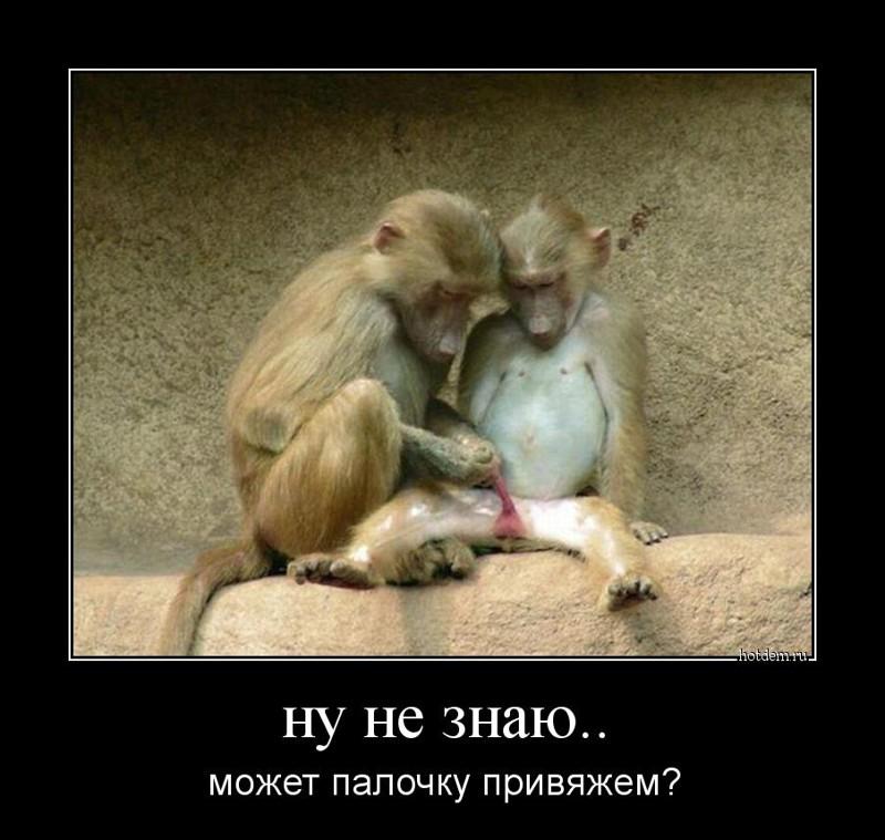 Прикольные картинки обезьян с надписью, майкрософт паблишер