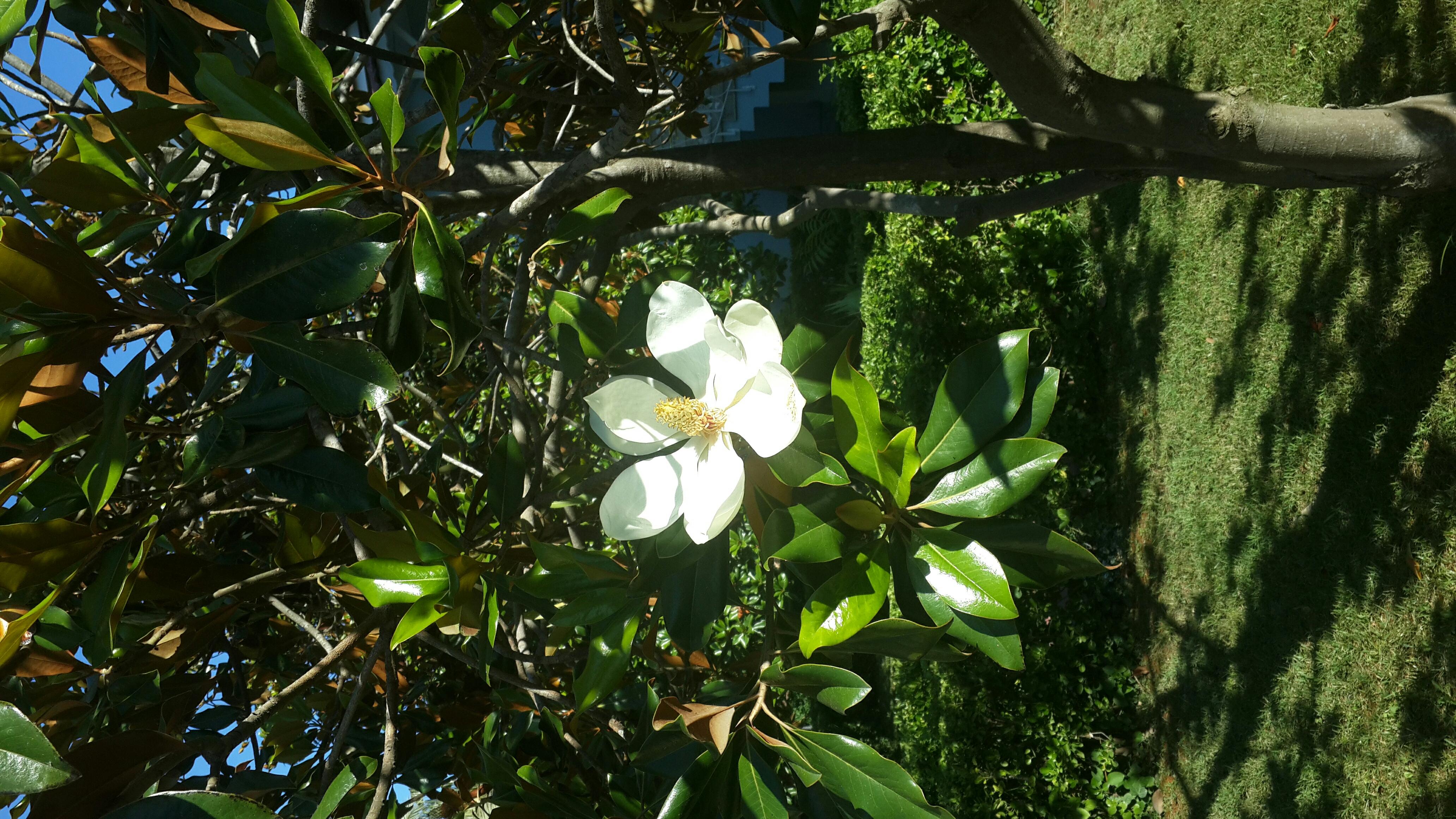 Растения сочи фото с названиями и описанием