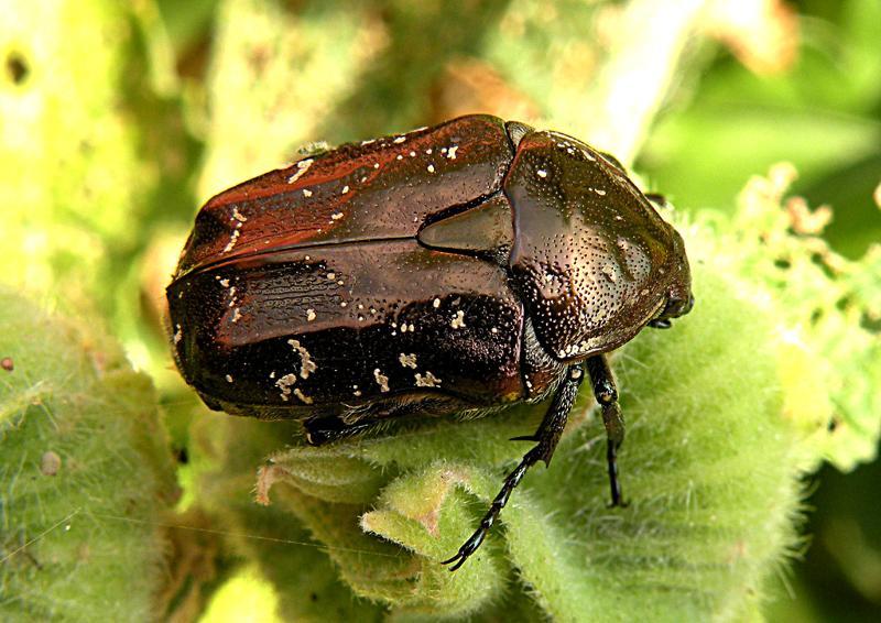 плавные названия черных жуков с картинками все все воспринимали