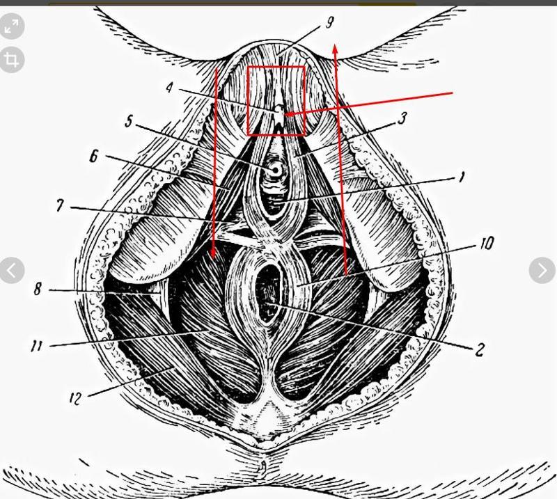Дрочит железа между анусом и вагиной эротические фильмов хорошем