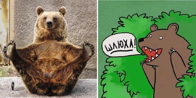 Что За Медведь Который Говорит Шлюха