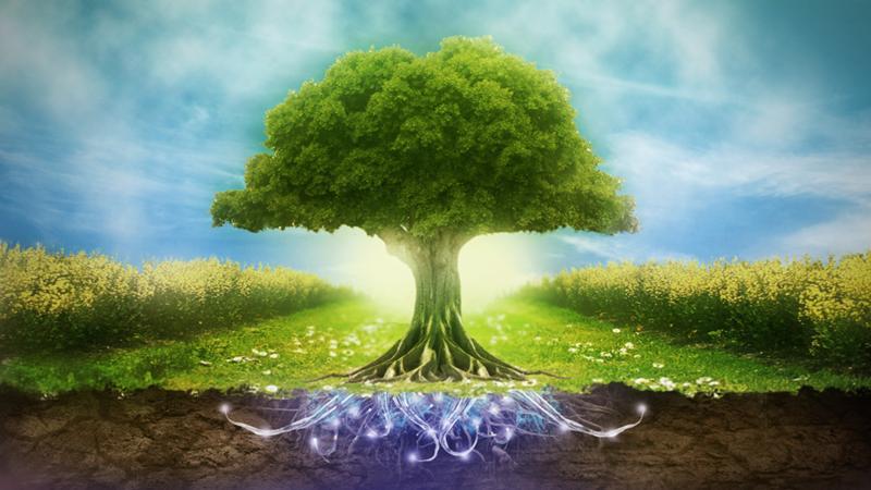 Доклад по английскому языку на тему окружающая среда 3492