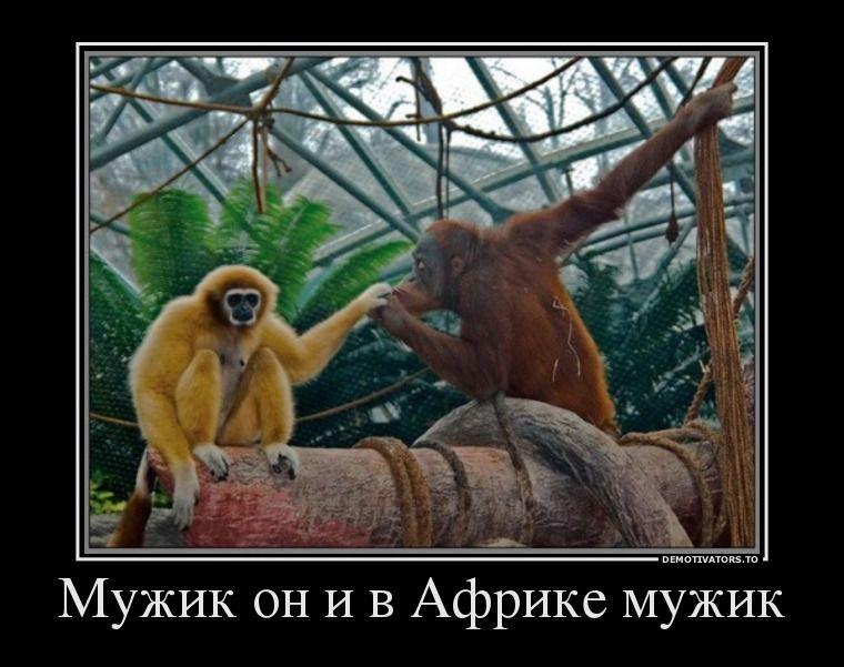 Пожеланием, смешные картинки с надписями про мужчин и животных