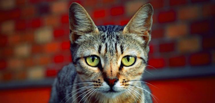 cat knocking at door
