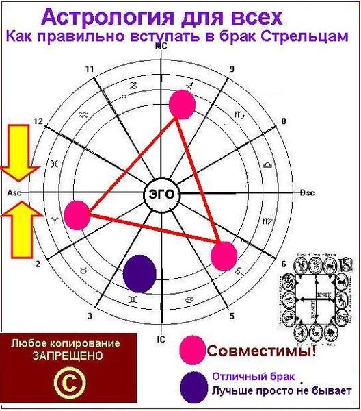 Стрелец и свинья гороскоп