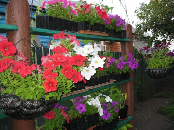 Ответы@mail.ru: какие цветы лучше посадить на балконе, если .