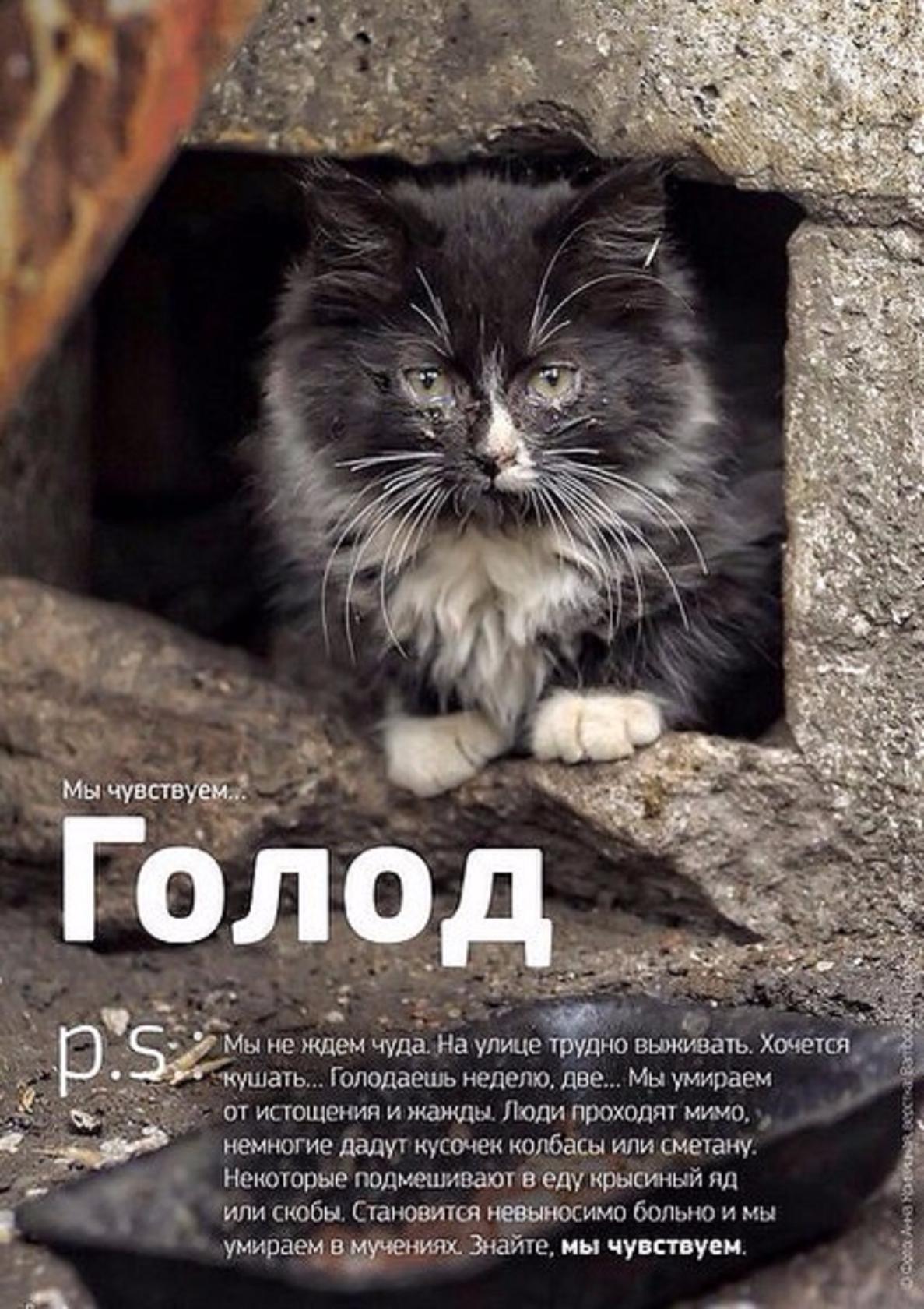 пляж стихи пиар котят автора представлены