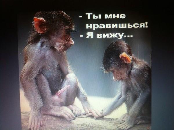 Днем, приколы с обезьянами картинки с надписями